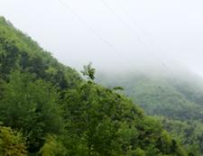 和平茶业茶园基地俯瞰图