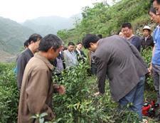 和平茶业园区建设培训