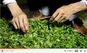 和平茶业收茶原料时筛选