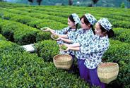 紫阳富硒茶专场推介会在京举行